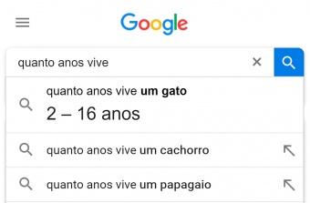 google resultado é mostrado antes mesmo de clicar em buscar